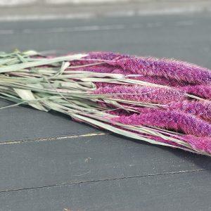 Droogbloemen Setaria (Gedroogde Naaldaar) - Paars