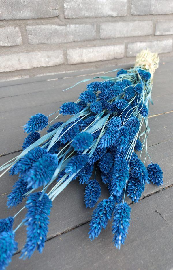 Droogbloemen Phalaris (Kanariegras) - Blauw