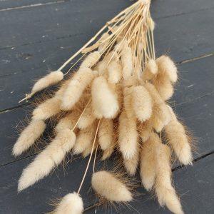 Droogbloemen Lagurus (Gedroogde Hazenstaart) - Naturel