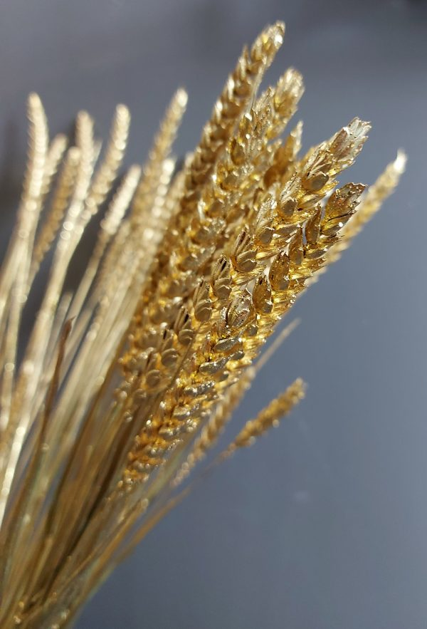 Droogbloemen Gedroogde Tarwe (Triticum) - Goud