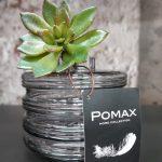 Pomax Kunstvetplant Echeveria met HouseVitamin Watertank Vaas