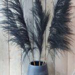 Extra Grote Pampas Pluim - Zwart